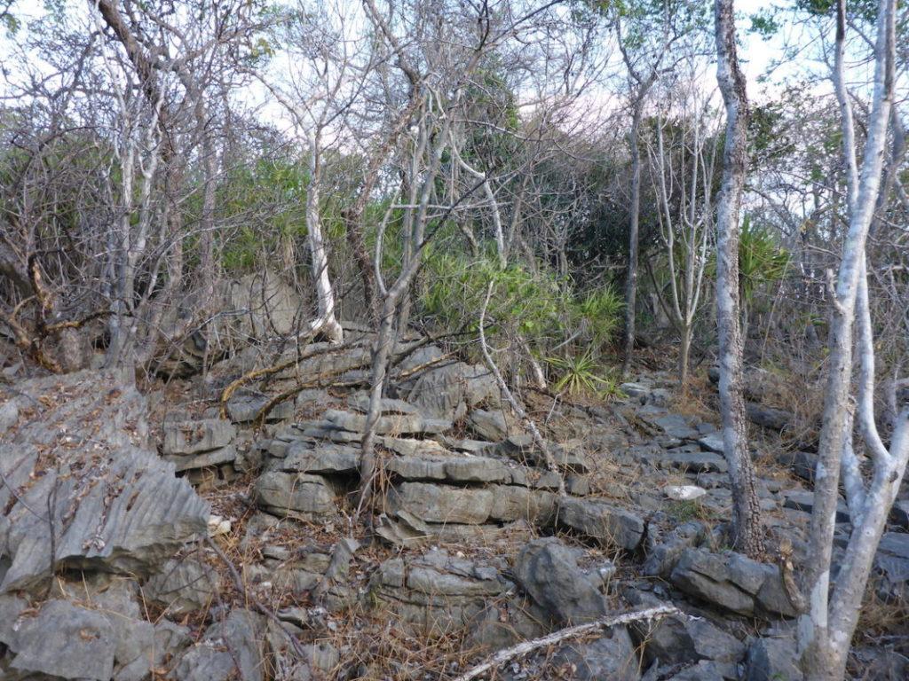 """La Reserva de Ankarana se caracteriza por ocupar una formación kárstica denominada """"tsingy"""", que constituye una matriz compleja de hondonadas y cañones sobre la que puede crecer vegetación. Fotografía de Frank Glaw, 2016."""