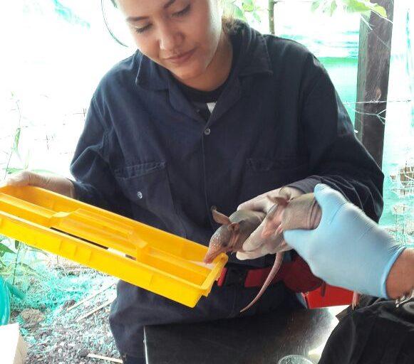 Rescate y limpieza de un armadillo. Foto: Cabildo Verde