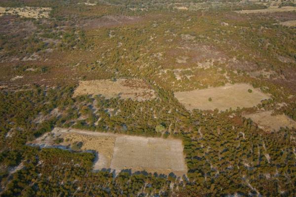 Botsuana: deforestación en el delta del Okavango, uno de los humedales más importantes de África. Foto: Rhett A. Butler