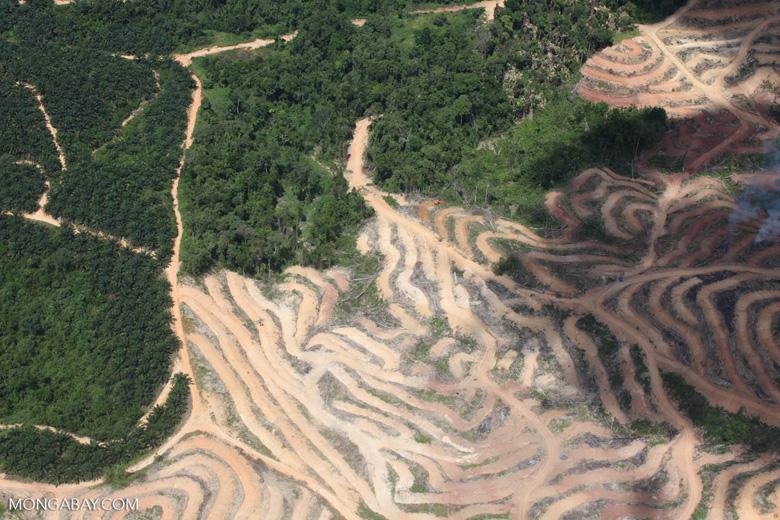 asia-deforestation-in-borneo-sabah_2474 | Blogs El Espectador