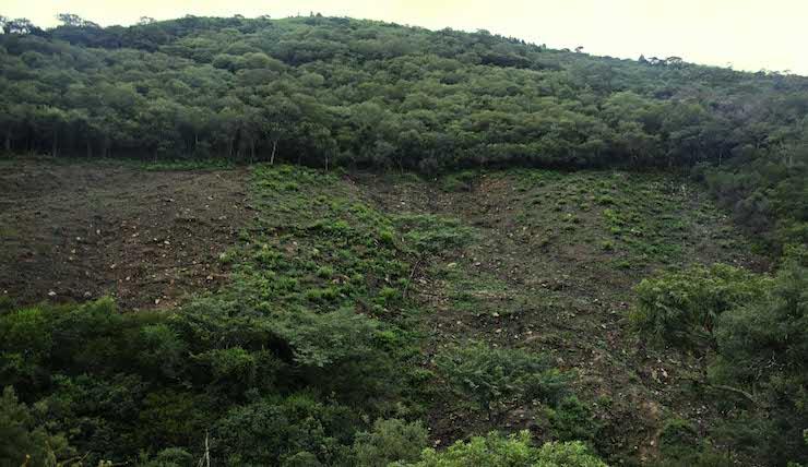 Deforestación de bosques a causa de la agricultura a pequeña escala en los valles. Las propiedades pequeñas y las comunitarias registraron la mayor superficie deforestada en el país entre 2012 y 2016. Foto: Eduardo Franco Berton