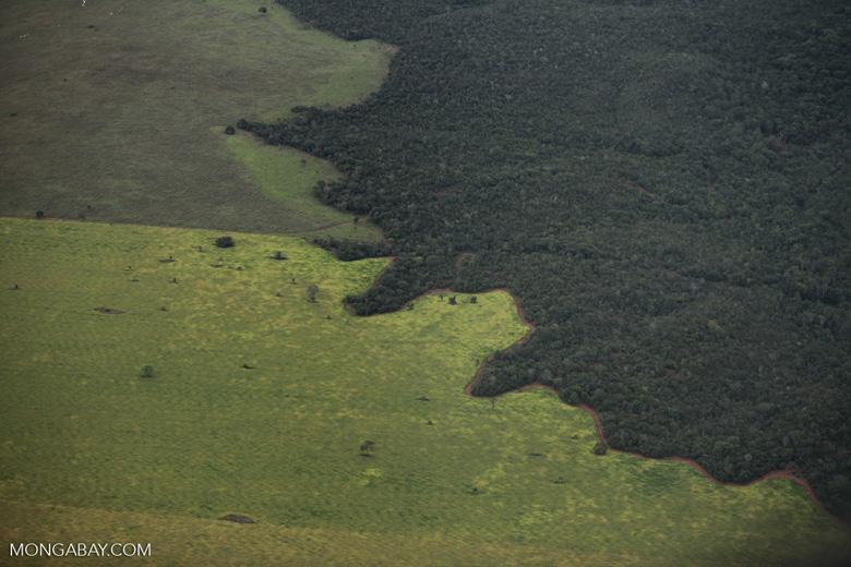 Brasil: el Bosque Amazónico cede ante los pastizales de la ganadería. Foto: Rhett A. Butler