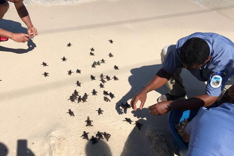 Miles de turistas llegan diariamente a Playa Blanca atraídos por su arena tersa y sus aguas cristalinas. Aunque la capacidad de carga es de 3124 personas diarias, muchas veces llegan hasta 14 000. Foto: Ministerio de Ambiente de Colombia.