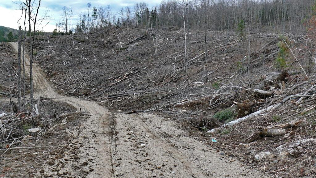 Los suelos son arrasados en todo el continente. En la imagen, un bosque destruido en Québec, Canadá. Foto: Deplanque Joel / Shutterstock