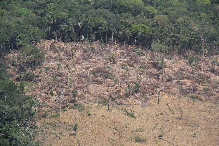 Guaviare, cuya selva conecta la Amazonía y la Orinoquía, es uno de los cinco departamentos con mayor tasa de deforestación en Colombia. Foto: Semana.