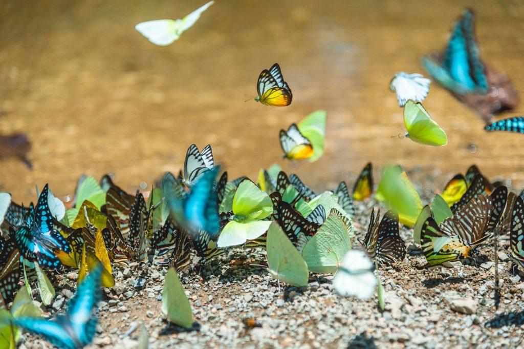 En América, el 25% de la fauna tiene algún tipo de amenaza y está en peligro de desaparecer. Foto: IPBES