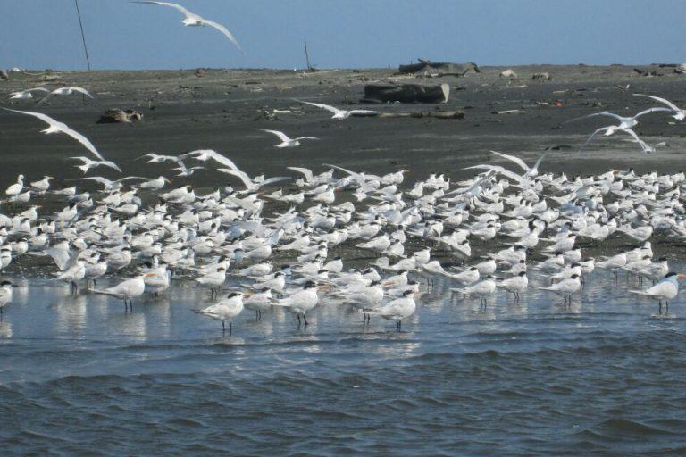 Miles de aves hacen parada en esta región costera de Colombia. Foto: Vía Parque Isla de Salamanca.