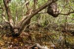 En la bahía de Cispatá pueden encontrarse manglares, bosques secos, pantanos costeros y de agua dulce en el área continental, y en sus profundidades, fondos sedimentarios y praderas marinas que filtran las aguas del mar Caribe para darle vida a ecosistemas coralinos.Foto: Clara Lucía Sierra.