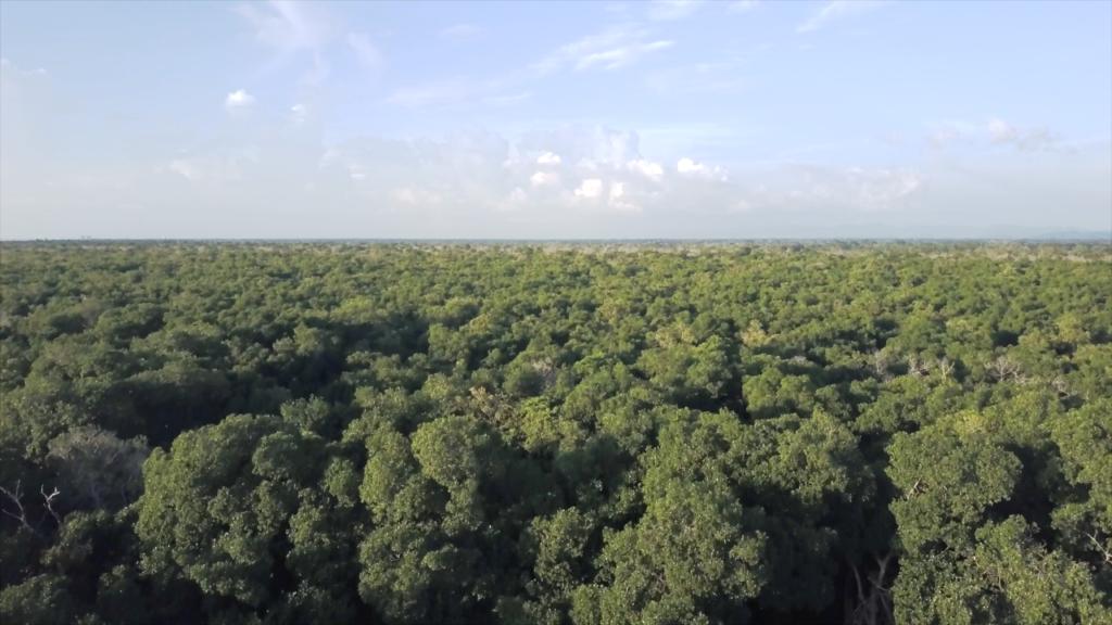 Los manglares de la bahía de Cispatá son unos de los mejor conservados en Colombia. Foto: Clara Lucía Sierra.