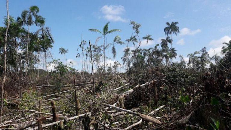 Pérdida de bosque en la región de Sabanas del Yarí. Foto: Semana Sostenible.