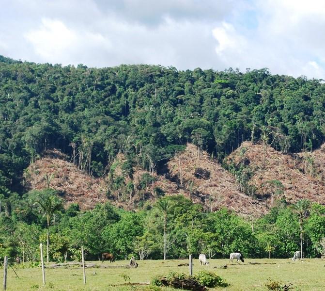 La praderización y la gandería extensiva son dos de las principales causas de la deforestación. Foto: Ministerio de Ambiente de Colombia.