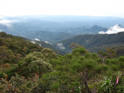 Palawanosorex muscorum se encontró en el monte Mantalingajan, una montaña en la isla de Palawan en el sur de Filipinas. Imagen de Danilo Balete