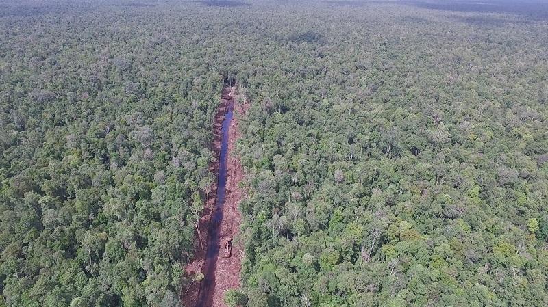 El canal a través del bosque pantanoso de turba en Sungai Putri supuestamente excavado por PT Mohairson Pawan Khatulistiwa. Imagen cortesía de International Animal Rescue