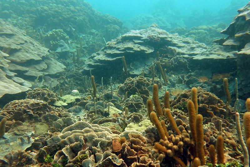 Más de 60 especies de corales y 120 de peces se mantienen en buen estado de conservación en las 102 hectáreas del arrecife de Varadero, único ecosistema con estas características en la bahía de Cartagena. Foto: Valeria Pizarro