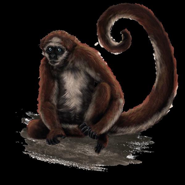 Mono araña.