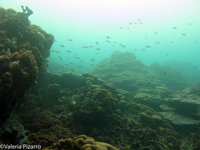 Más de 100 especies de peces viven en el arrecife de Varadero. Foto: Valeria Pizarro.