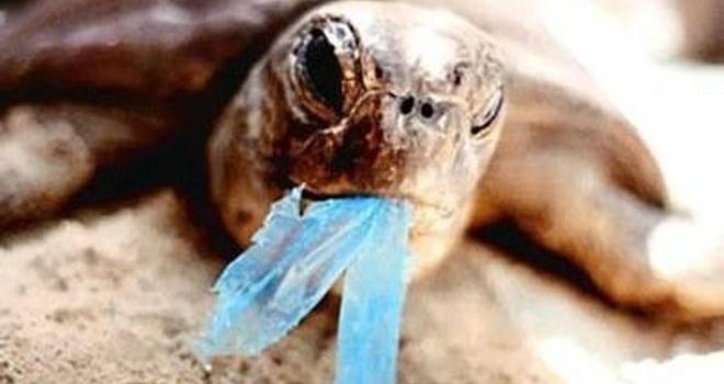 La isla de Galápagos ha prohibido el uso de bolsas de plástico para proteger su biodiversidad. Foto: Ecogal.