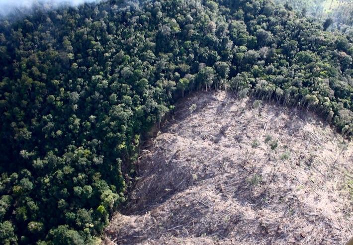 Parches deforestados como este grafican el avance de la deforestación en la zona de adyacencia entre Guatemala y Belice. Foto: Asociación Balám.
