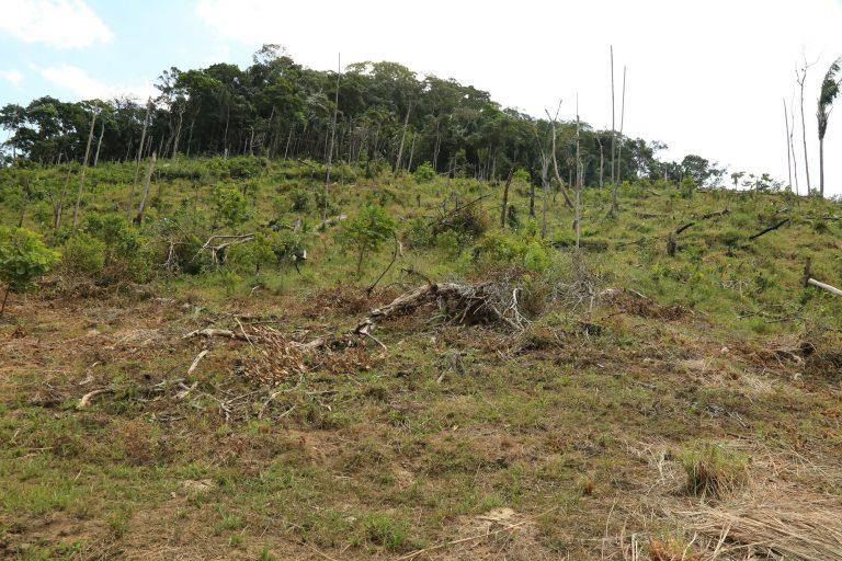 Habitantes  y autoridades aseguran que grupos ilegales les pagan a personas para que talen en el Parque Tinigua y luego habiten en las tierras praderizadas. Foto: Cormacarena.
