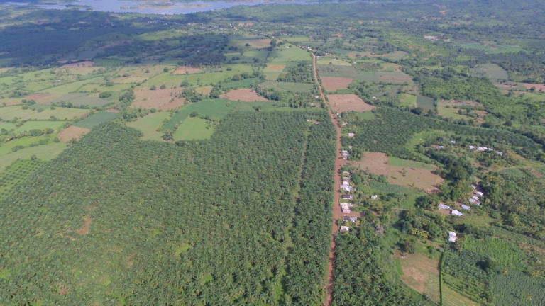 Imagen aérea de las plantaciones de palma aceitera en Maríalabaja. Cortesía de: Observatorio de Territorios Étnicos y Campesinos (OTEC) Universidad Javeriana en convenio con UE.