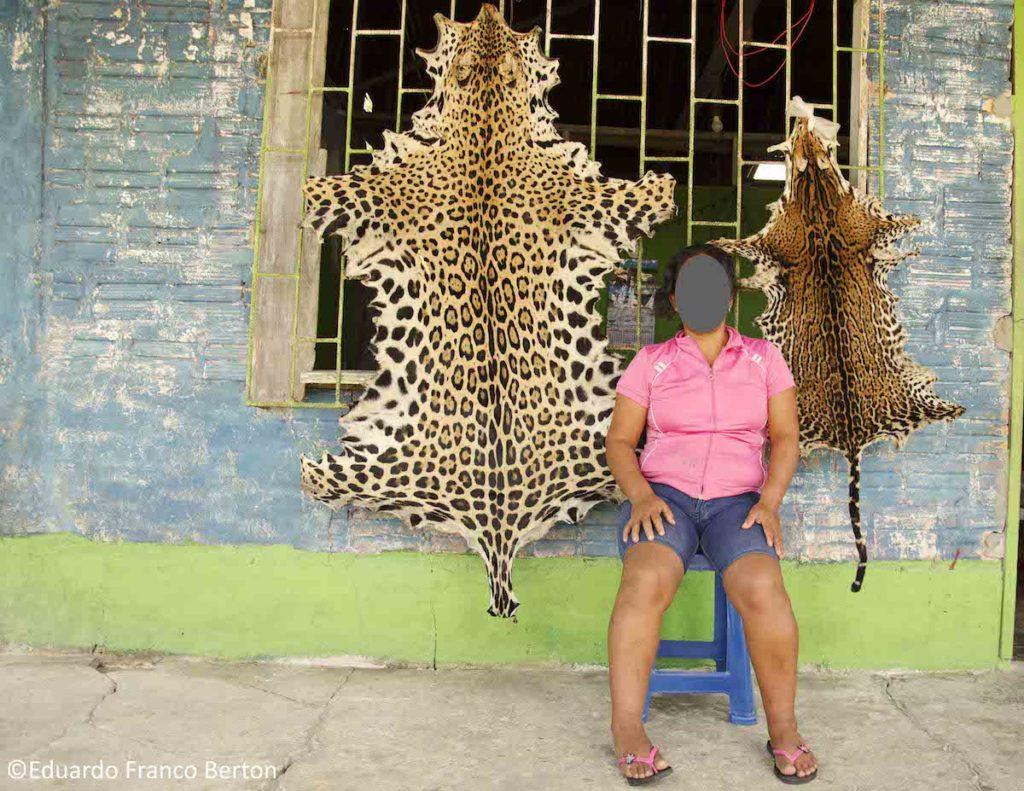 Gabriela indica que ciudadanos chinos que llegan hasta Iquitos la buscan para comprarle colmillos de jaguar. Foto: Eduardo Franco Berton.