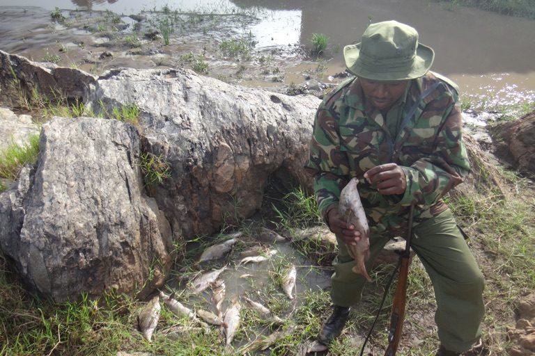 Peces muertos en el río Mara en Kenia. Imagen de Christopher Dutton