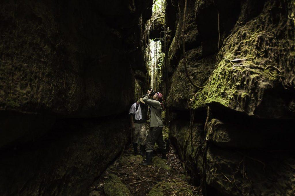 Las tres expediciones recientes a las zonas centro y norte del Parque Nacional más grande de Colombia lograron registrar 177 especies de 45 familias de aves.