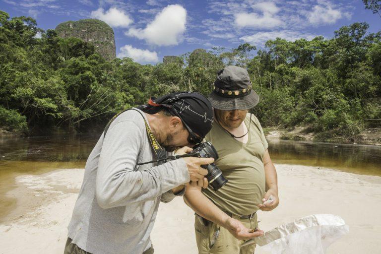A las zonas norte y centro de Chiribiquete no solo llegaron investigadores en aves sino que se estudiaron diferentes grupos como mamíferos, reptiles y peces. Foto: Parques Nacionales Naturales de Colombia.