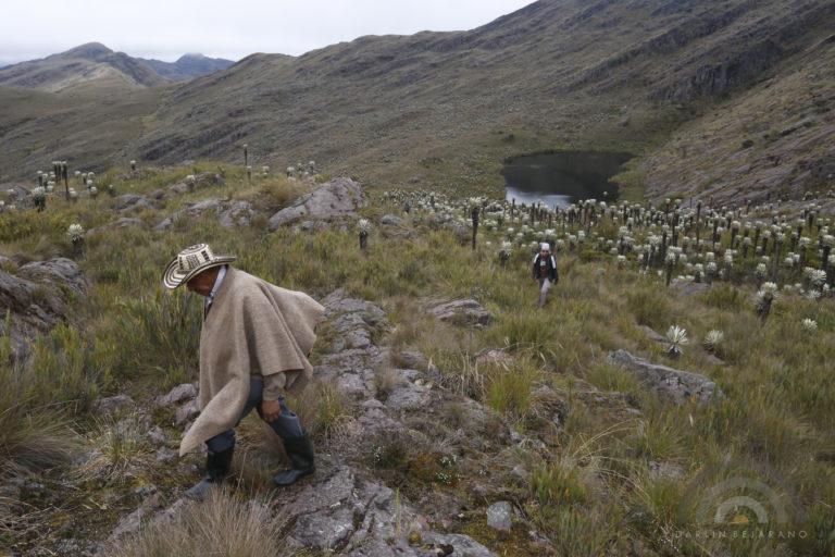 El páramo de Pisba alcanza una altura de 3800 metros sobre el nivel del mar. Foto: Darlin Bejarano.