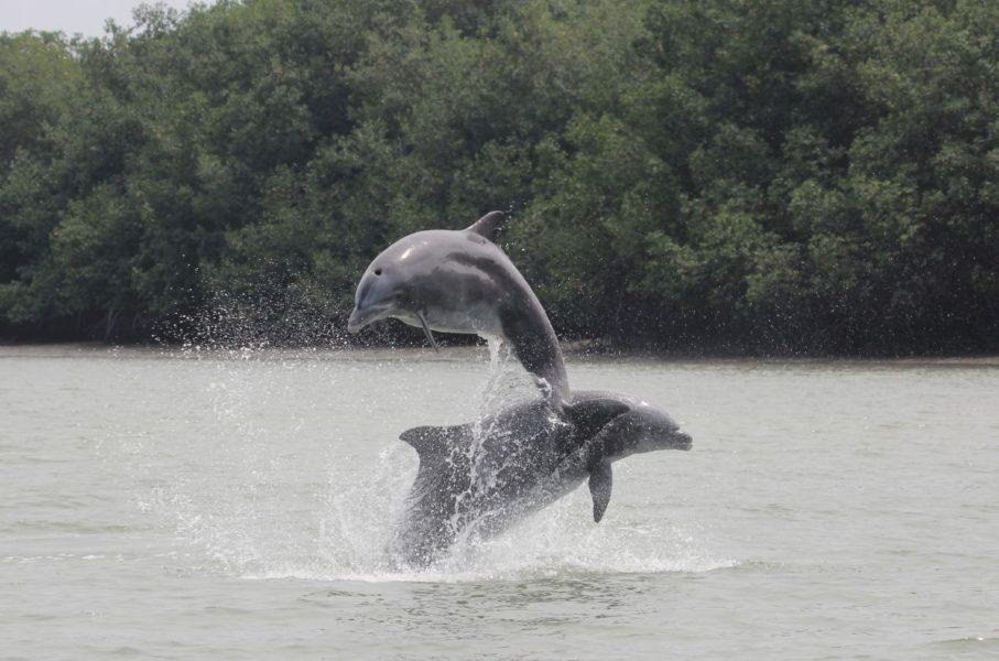 El 83 % de las poblaciones de especies de agua dulce se han reducido. Fotógrafo: Fernando Félix
