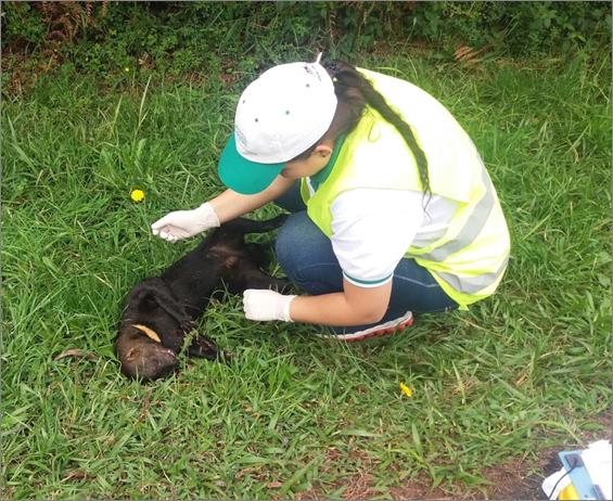 Animal atropellado en carretera colombiana. Foto: Recosfa.