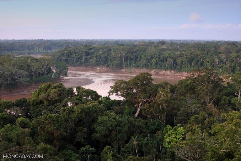 La Amazonía perdió la quinta parte de su territorio en los últimos 50 años. Fotógrafo: Rhett Butler