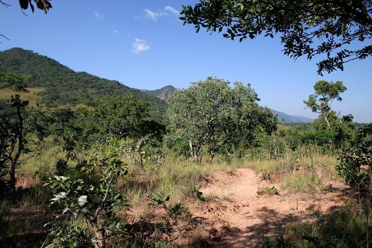 Sabana boscosa en Malaui. Foto: Dr. Thomas Wagner, asesoría e investigación medioambiental y agrícola (CC BY-SA 3.0)], a través de Wikimedia Commons.