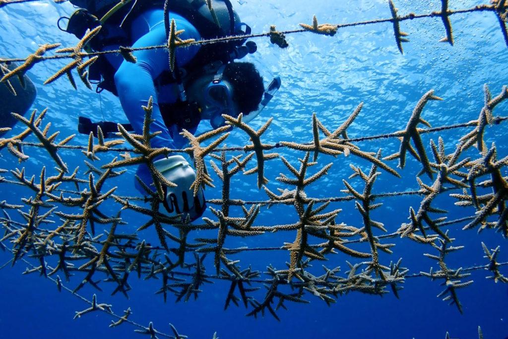 Los pescadores de las localidades son remunerados económicamente, por empresas privadas, bajo el modelo de compensación de huella de carbono. Foto: Phanor Montoya