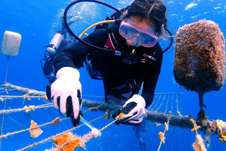 Pescadores se ocupan de la matención de las guardería de corales. Foto: Phanor Montoya.