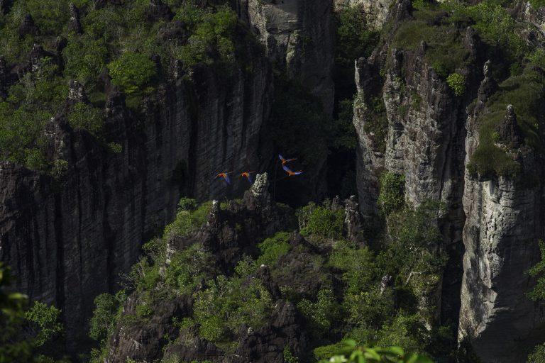 Chiribiquete es un Parque Nacional que además es un área importante para la conservación de las aves (AICA). Foto: Parques Nacionales