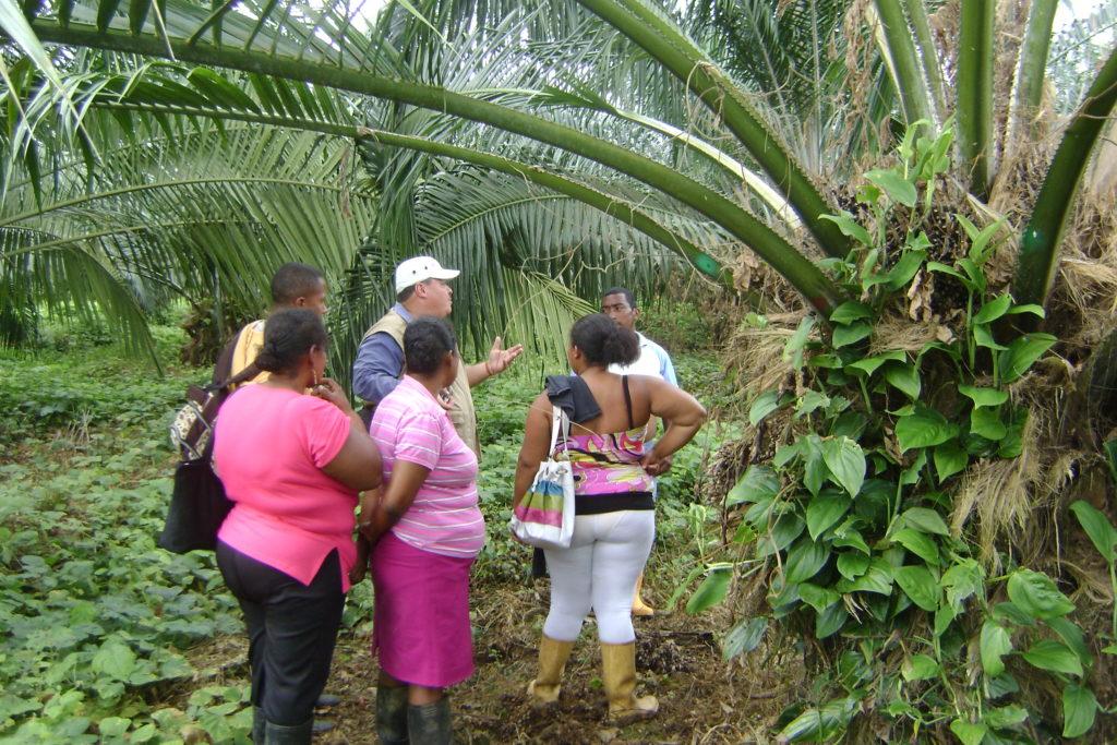 Palmasur en Tumaco cree que la palma en la región no fue dañina como en otras zonas colombianas. Foto: Palmasur
