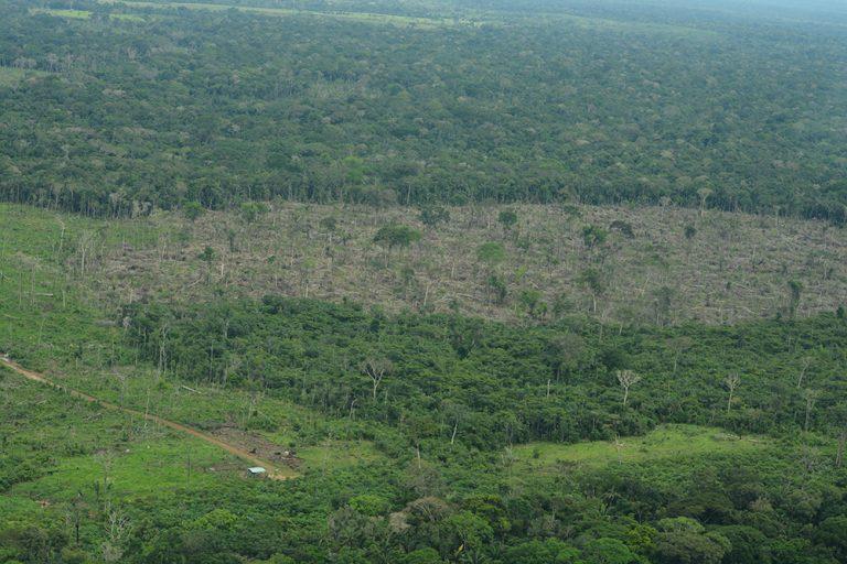 Deforestar para luego apoderarse de la tierra es una de las acciones más comunes de bandas criminales dedicadas a cultivos ilícitos y minería ilegal. Foto: Fundación para la Conservación y el Desarrollo Sostenible (FCDS).
