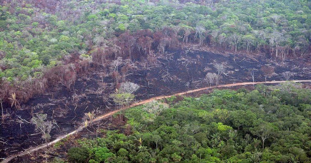 Deforestación en el departamento del Guaviare. Foto:Fundación para la Conservación y el Desarrollo Sostenible (FCDS).
