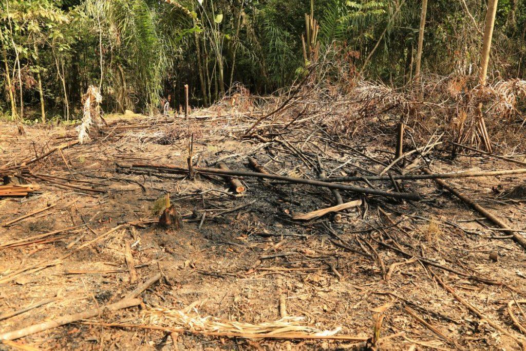 La deforestación en la Amazonía se ha disparado. La deforestación en la Amazonía se ha disparado y ha sido un año difícil para líderes ambientales e indígenas que han sido amenazados y asesinados. Foto: Cormacarena