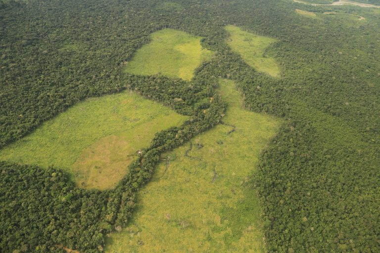 Grandes extensiones de tierra deforestada en el Parque Tinigua son luego usadas para sembrar cultivos ilícitos. Foto: Cormacarena.