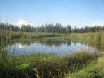 Espejo-de-agua-Humedal-Tibanica-21