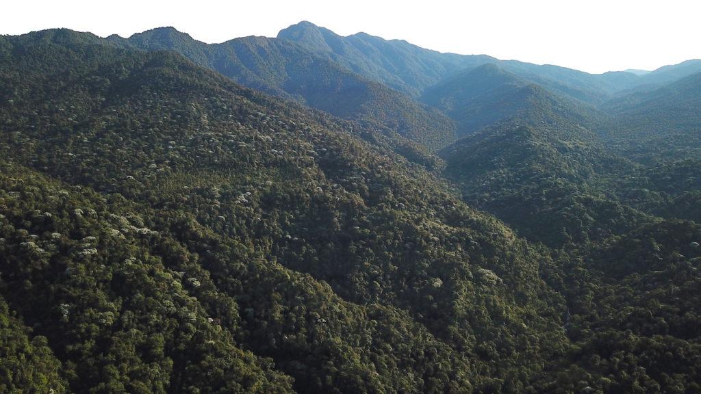 FOTOLa Reserva Río Manduriacu abarca 530 hectáreas pero se quiere extender el espacio de protección hasta las 1000 hectáreas. Foto: Sebastián Kohn-Fundación Cóndor Andino/Fundación EcoMinga