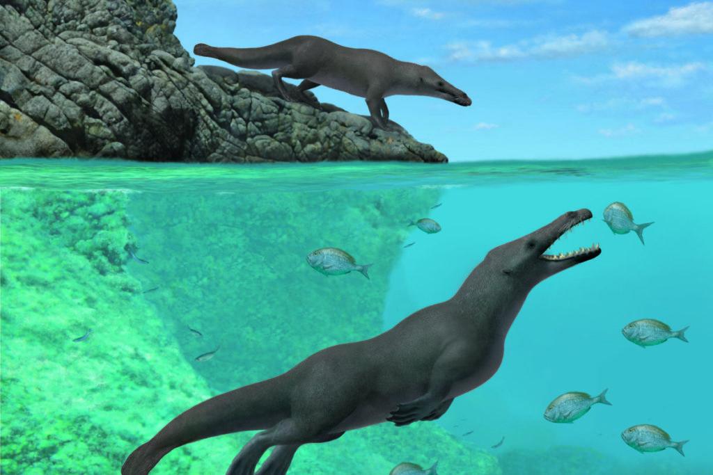 Reproducción artística de dos individuos de Peregocetus, uno de pie a lo largo de la costa rocosa de lo que hoy en día es Perú y el otro en el agua. Reconstrucción de A. Gennari.