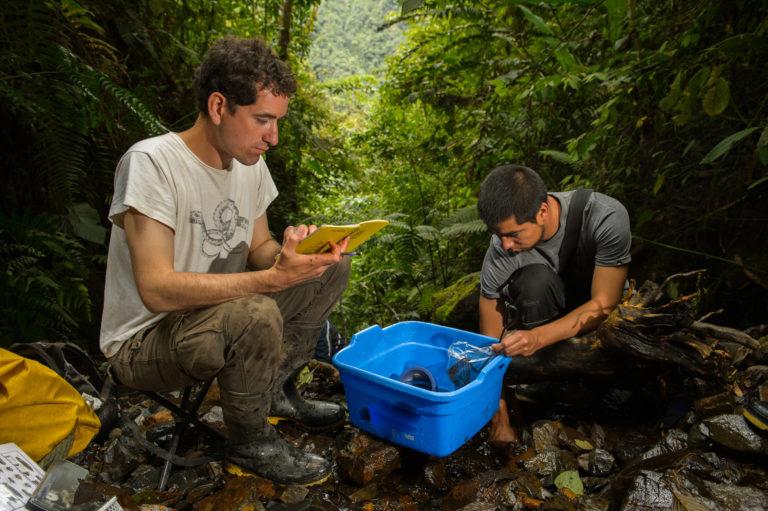 El 12 % de las especies afectadas a nivel mundial han tenido alguna forma de recuperación. Foto: Alexander Shepack.