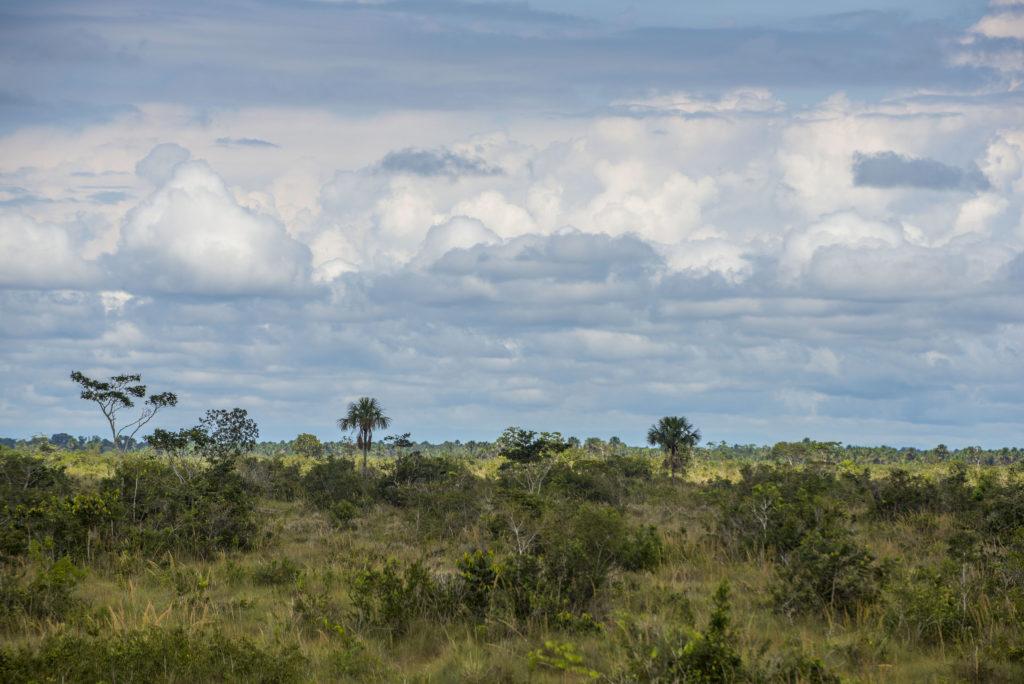 Vista panorámica de las Pampas del Heath, un ecosistema único en el Perú. Foto: © Daniel Rosengren / FZS Perú.