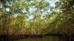 manglares PARA ARTICULO