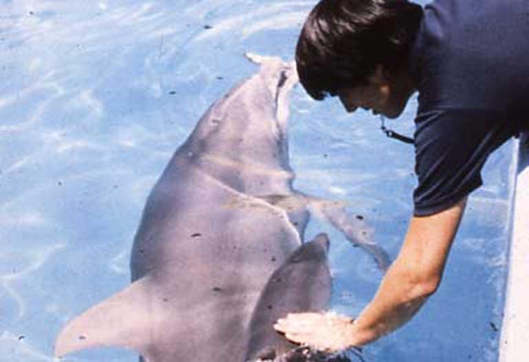 Ken Ramírez perfeccionó sus habilidades de entrenamiento con animales trabajando durante muchos años con delfines. Foto cortesía de Ken Ramírez