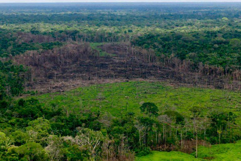 La Operación 'Artemisa', contra la deforestación, se adelantará en todos los Parques Nacionales Naturales del país, en desarrollo de la Política de Defensa y Seguridad, para proteger la biodiversidad. Foto: Efraín Herrera – Presidencia de Colombia.