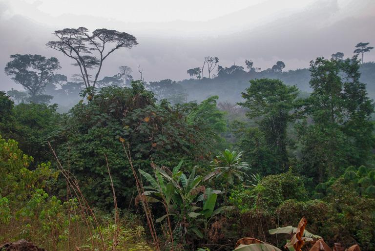 Una aldea situada al borde del bosque en Camerún. Imagen de John C. Cannon/Mongabay.